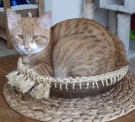 keramieke kattenmandje